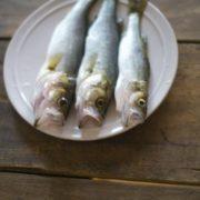 シーバスは癖のない魚!シーバスのおすすめ料理は天ぷら!-アイキャッチ