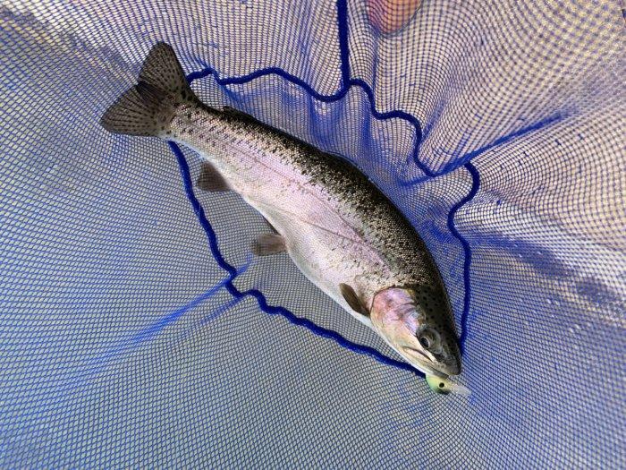 トラウトをクランクベイトで釣りたい初心者におすすめ画像