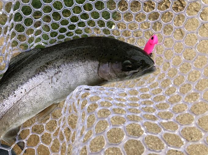 ボトムに張り付いた魚はバイブレーション
