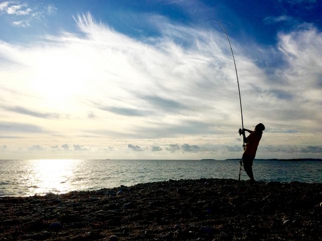 砂浜 投げ釣り
