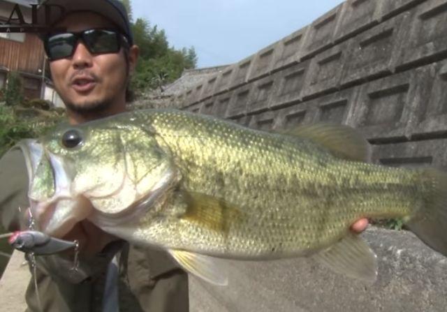 レイドジャパンのレベルバイブでバス釣りを攻略しよう!