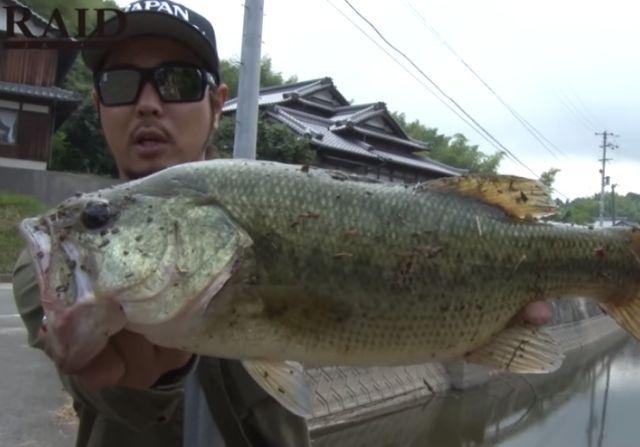 レイドジャパンのレベルバイブブーストでバス釣りを攻略しよう!